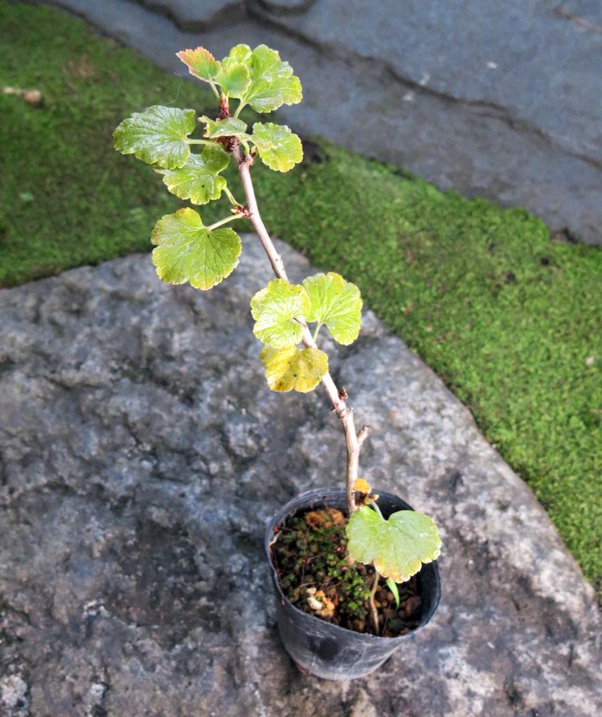 f:id:GardenPorter:20161109113501j:plain
