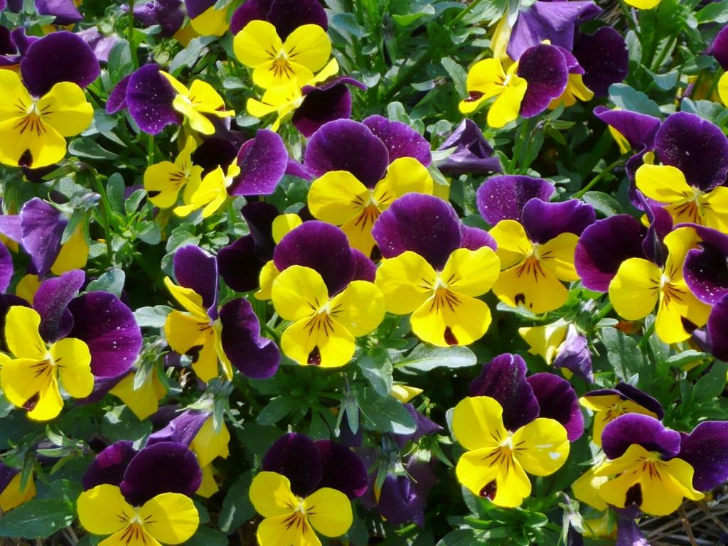 f:id:GardenPorter:20161110093130j:plain