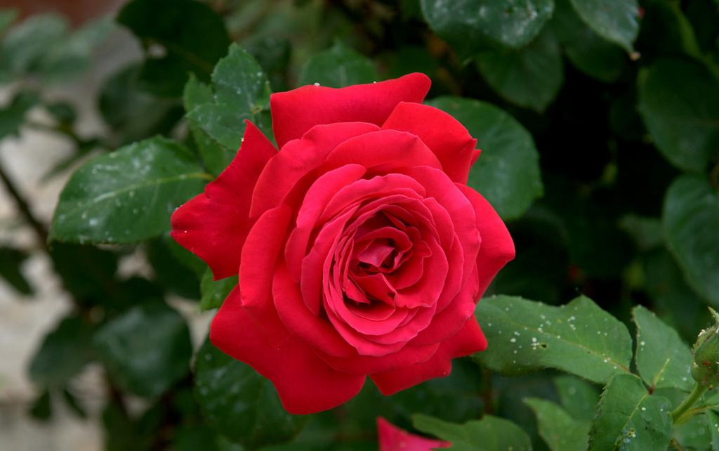 f:id:GardenPorter:20161110093746j:plain
