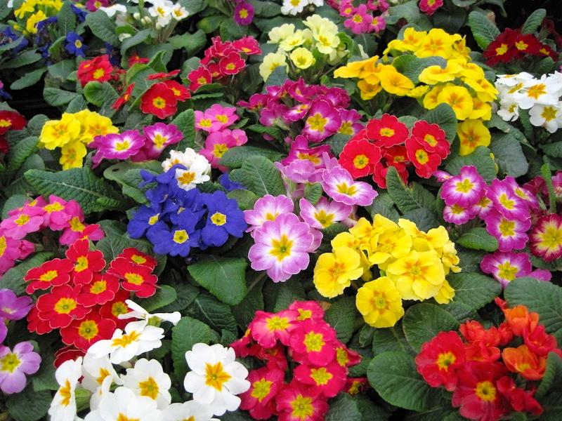 f:id:GardenPorter:20161110094000j:plain