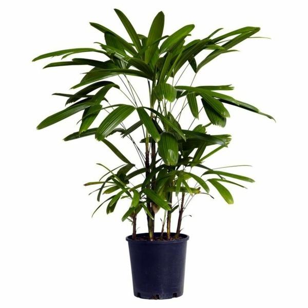 f:id:GardenPorter:20161209170028j:plain