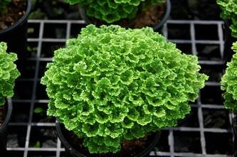 f:id:GardenPorter:20161209170238j:plain