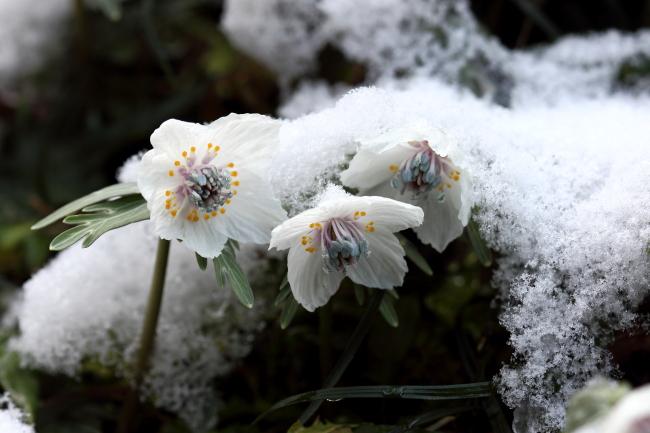 f:id:GardenPorter:20161212113530j:plain