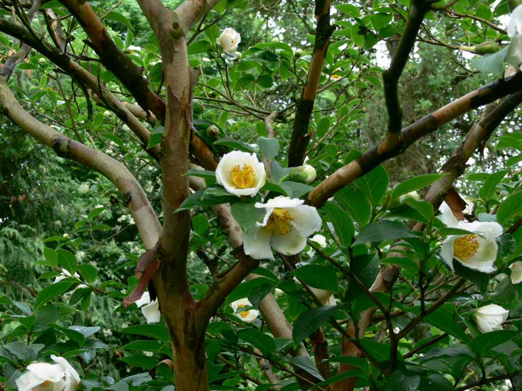 f:id:GardenPorter:20161219161247j:plain