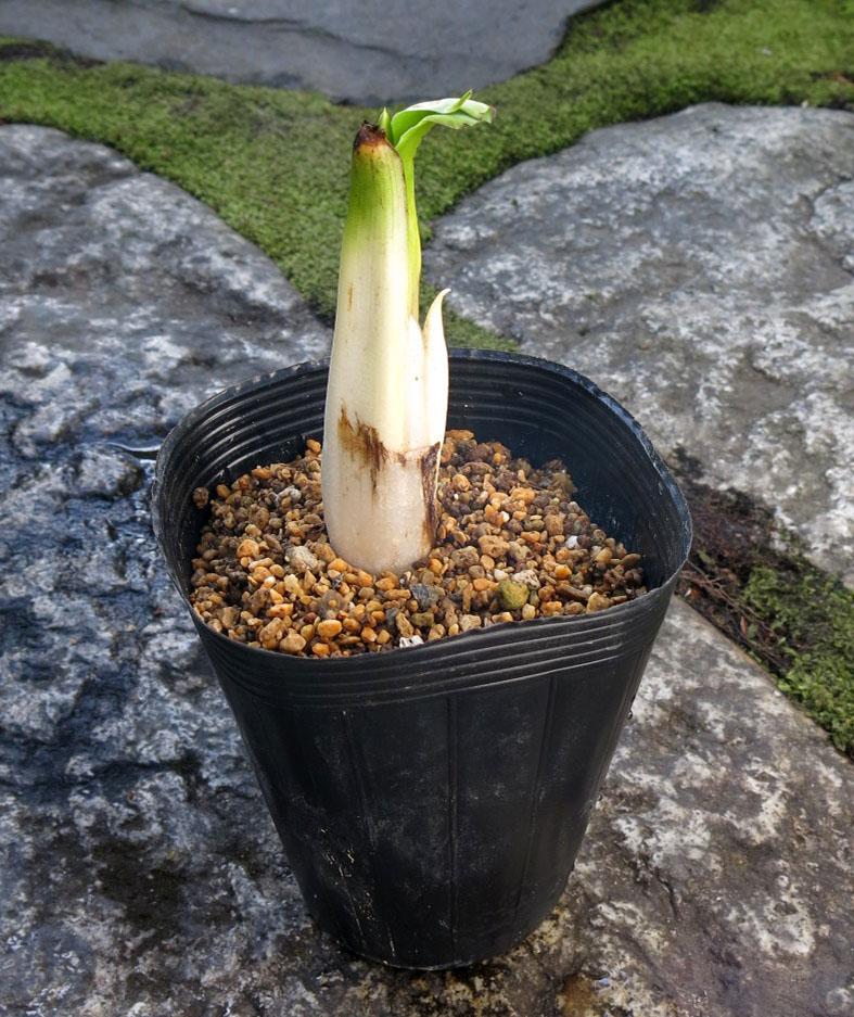 f:id:GardenPorter:20170202085520j:plain