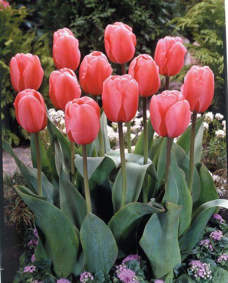 f:id:GardenPorter:20170206150450j:plain