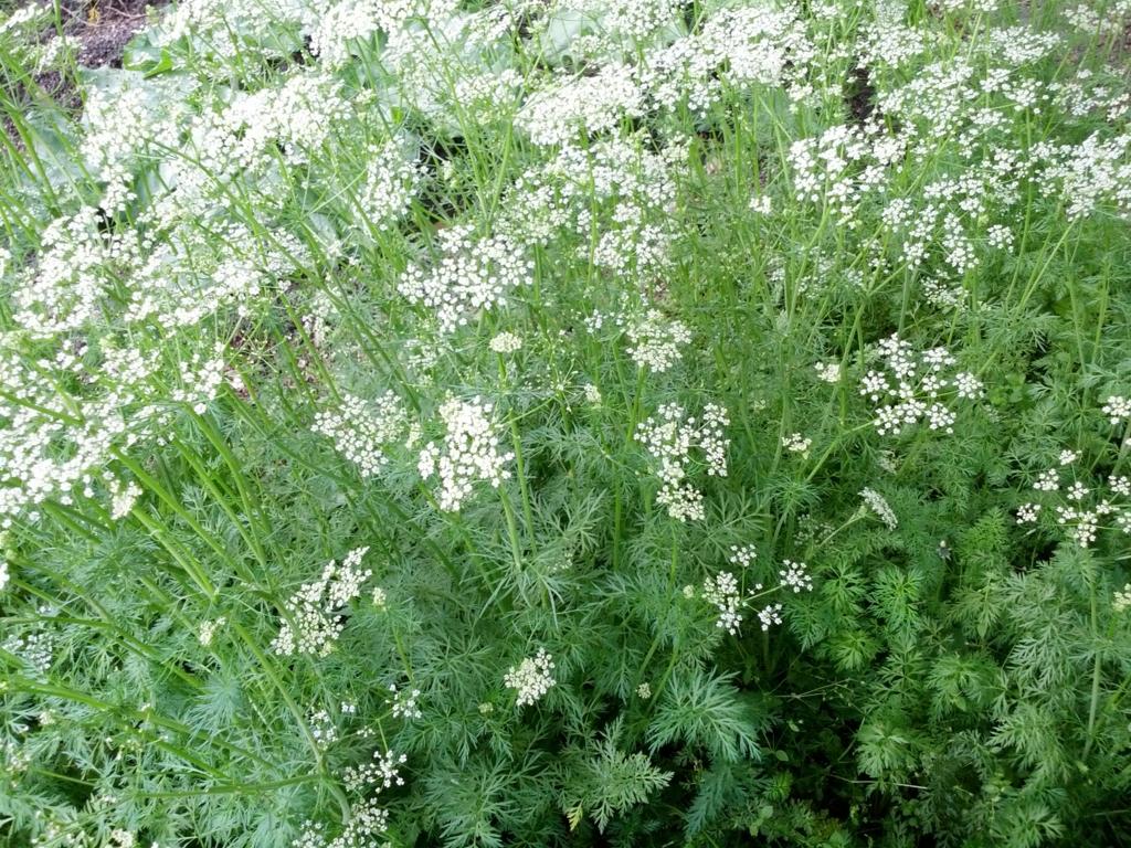f:id:GardenPorter:20170223121821j:plain
