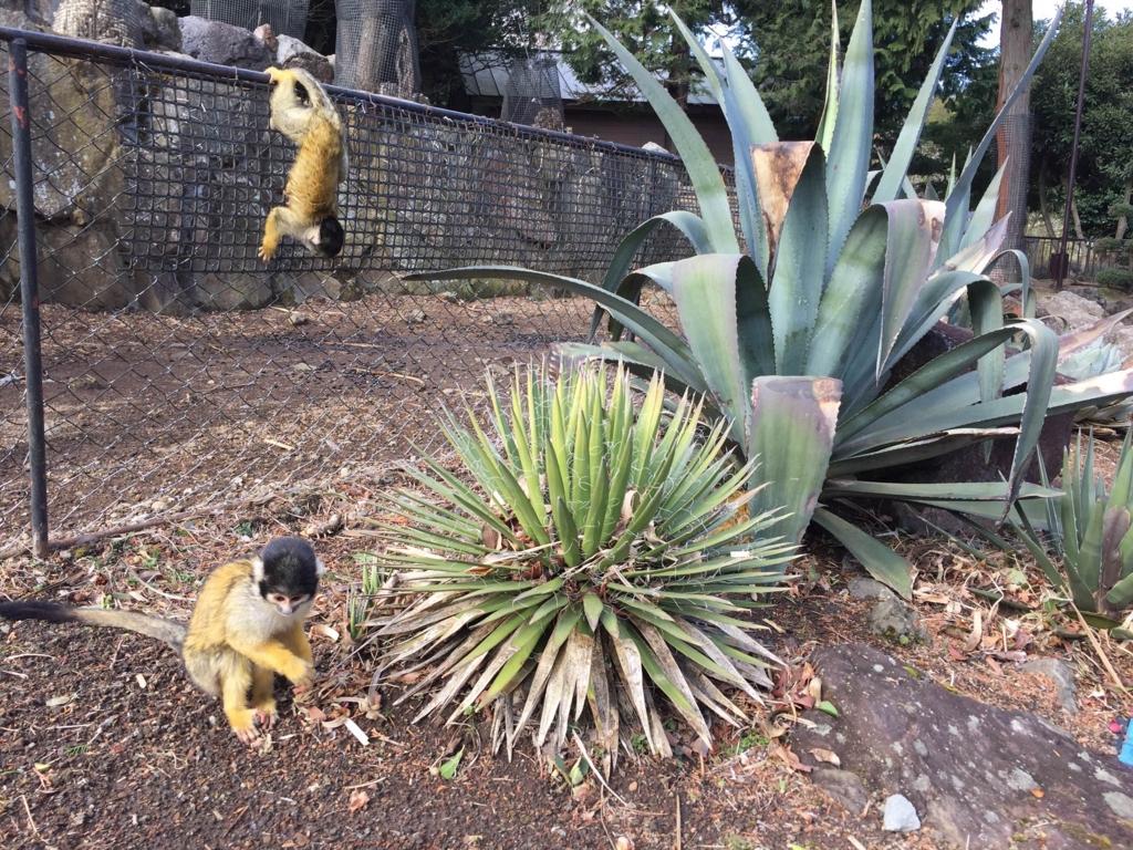 f:id:GardenPorter:20170302154959j:plain