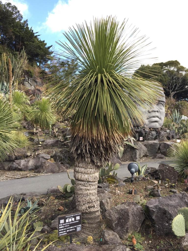 f:id:GardenPorter:20170302155634j:plain