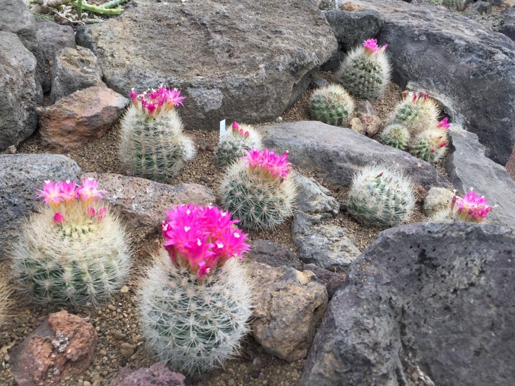 f:id:GardenPorter:20170303172652j:plain