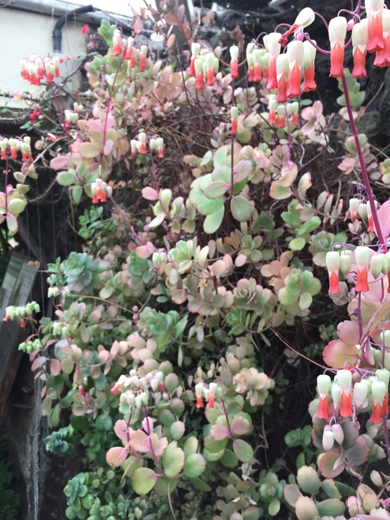 f:id:GardenPorter:20170306095330j:plain