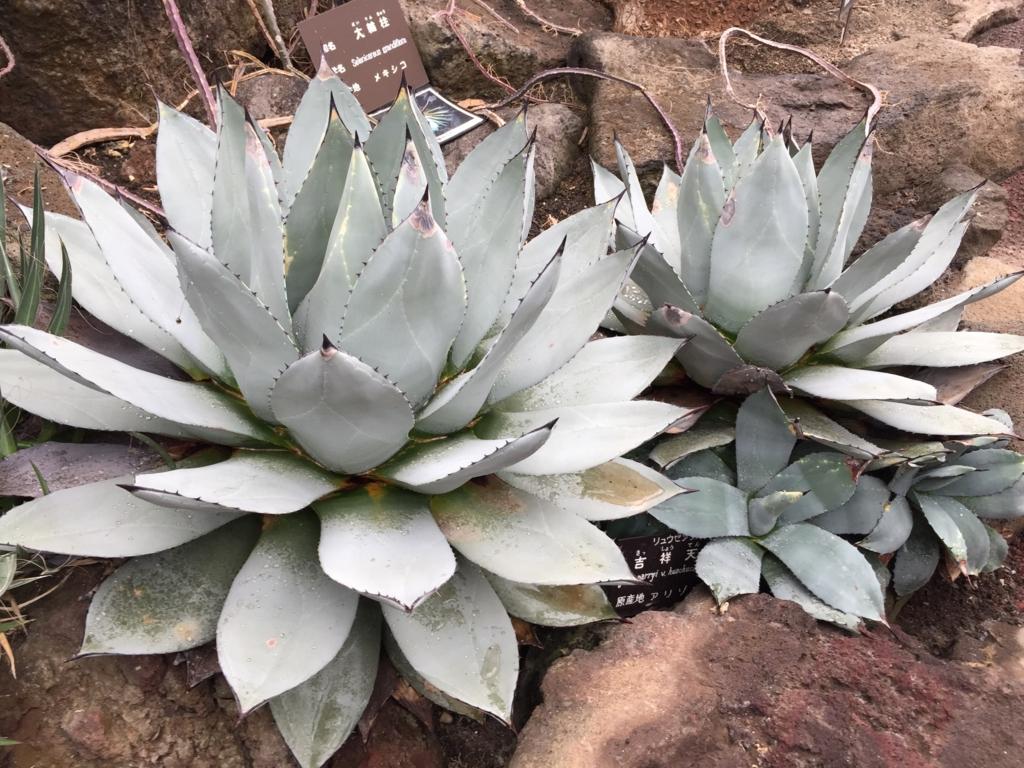 f:id:GardenPorter:20170306095726j:plain