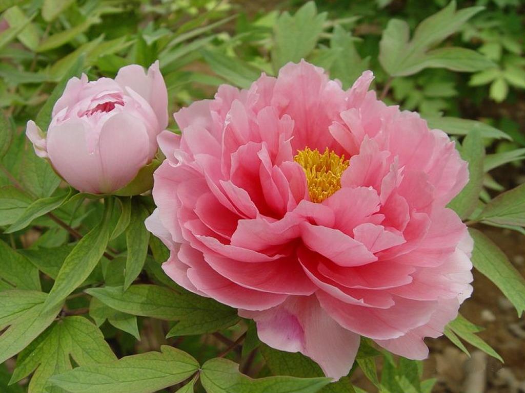 f:id:GardenPorter:20170317135843j:plain
