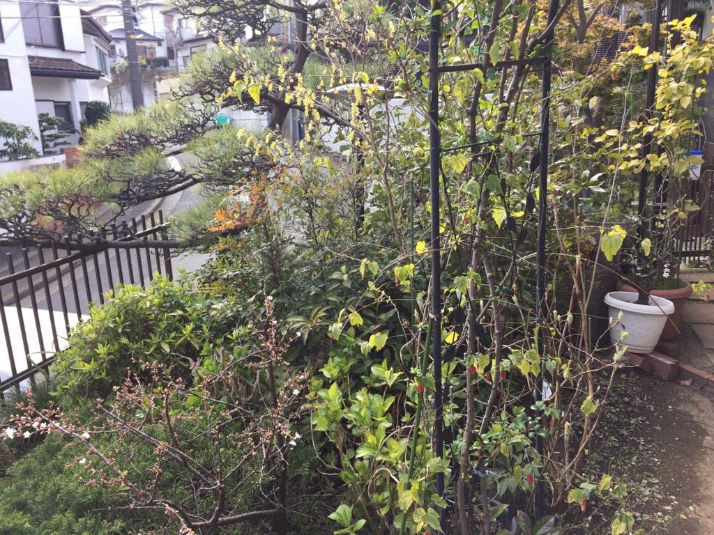 f:id:GardenPorter:20170410134508j:plain