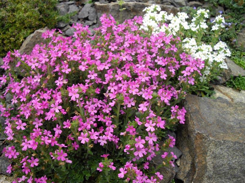 f:id:GardenPorter:20170420100416j:plain