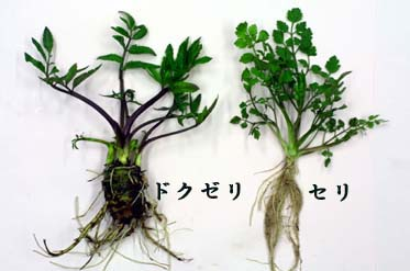 f:id:GardenPorter:20170428140941j:plain