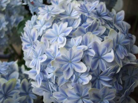 f:id:GardenPorter:20170512113313j:plain