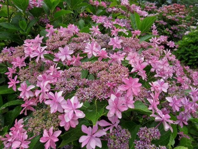 f:id:GardenPorter:20170512114313j:plain