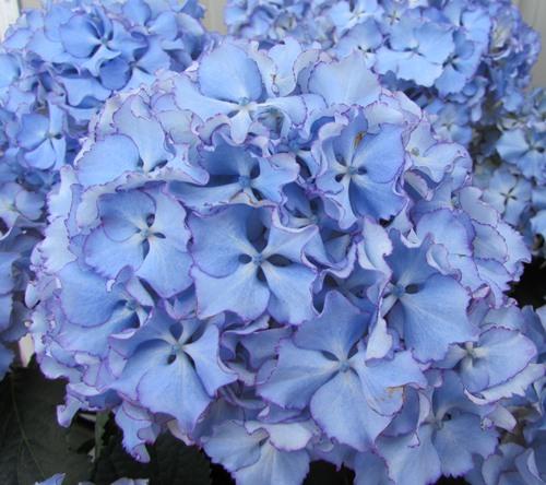 f:id:GardenPorter:20170512114534j:plain