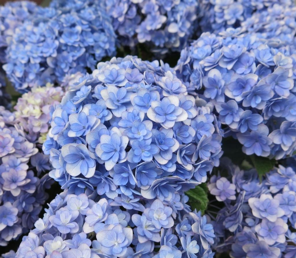 f:id:GardenPorter:20170512114706j:plain