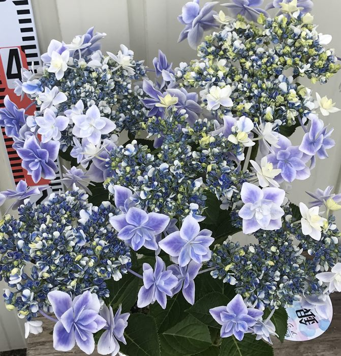 f:id:GardenPorter:20170512114930j:plain