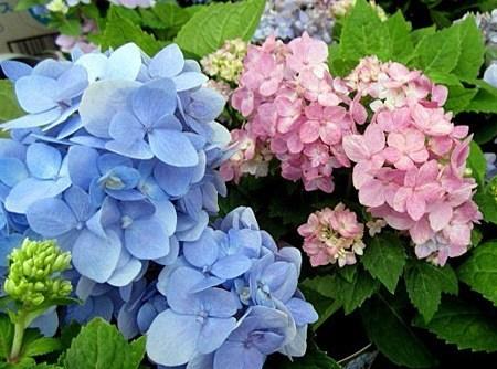 f:id:GardenPorter:20170512115140j:plain