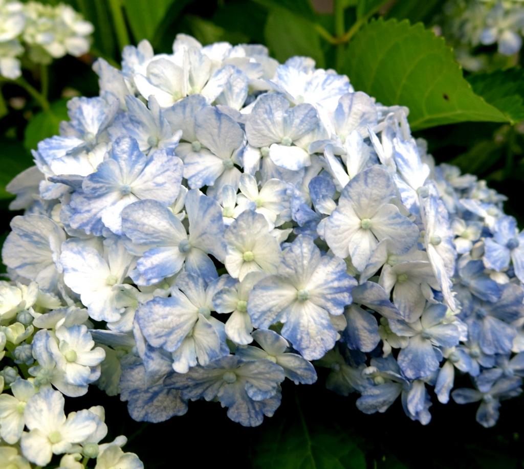 f:id:GardenPorter:20170512115507j:plain