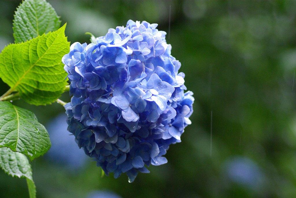 f:id:GardenPorter:20170522163845j:plain