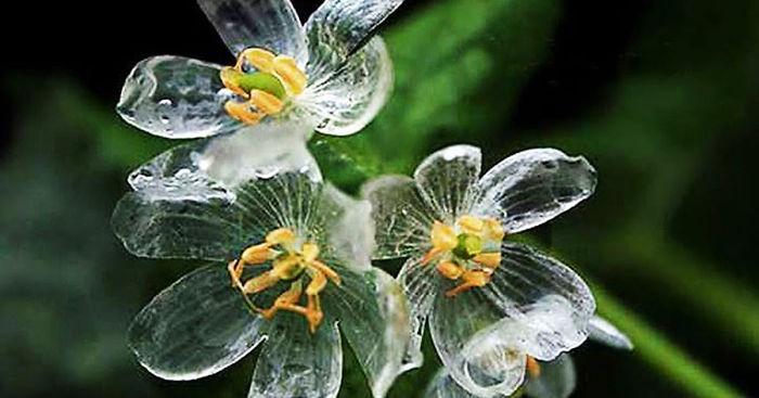 f:id:GardenPorter:20170522165728j:plain