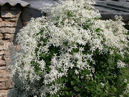 f:id:GardenPorter:20170601162459j:plain