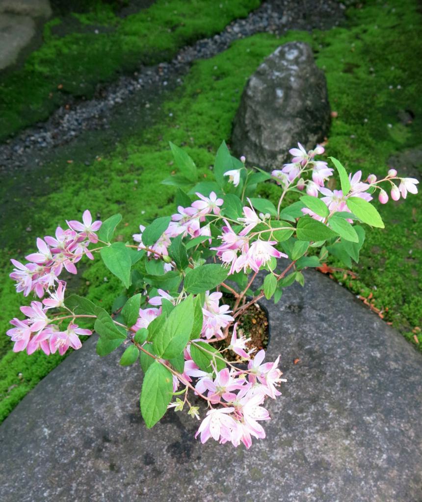 f:id:GardenPorter:20170615080948j:plain