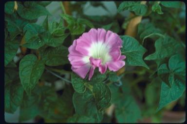 f:id:GardenPorter:20170622154202j:plain