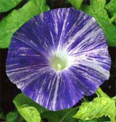 f:id:GardenPorter:20170622160525j:plain