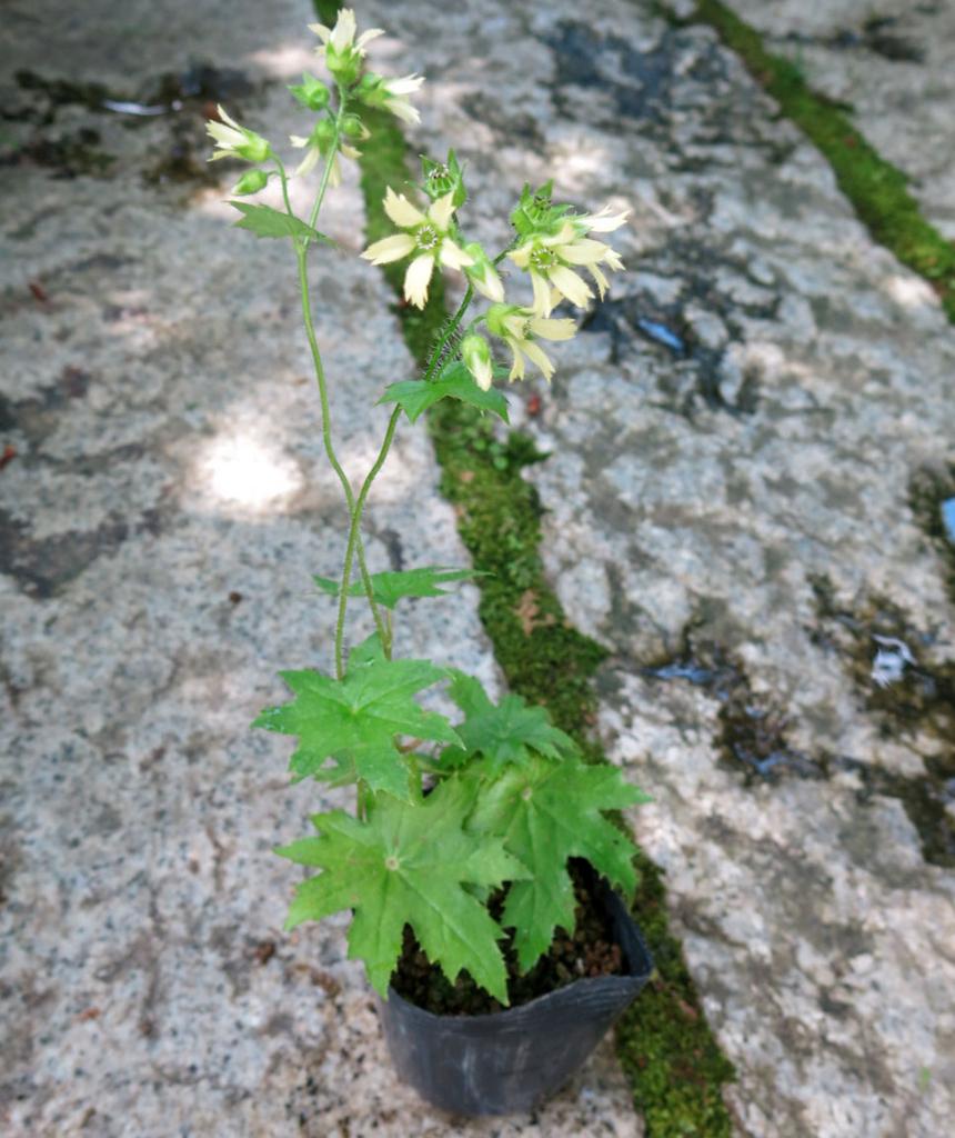 f:id:GardenPorter:20170713075704j:plain