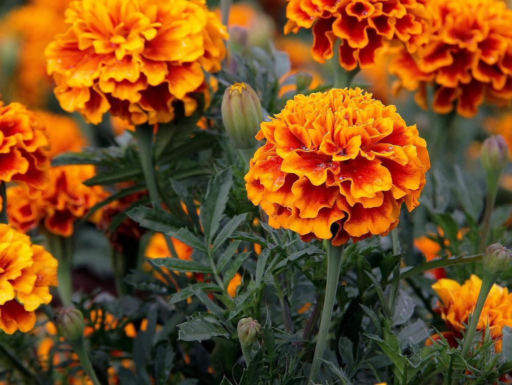 f:id:GardenPorter:20170713165008j:plain