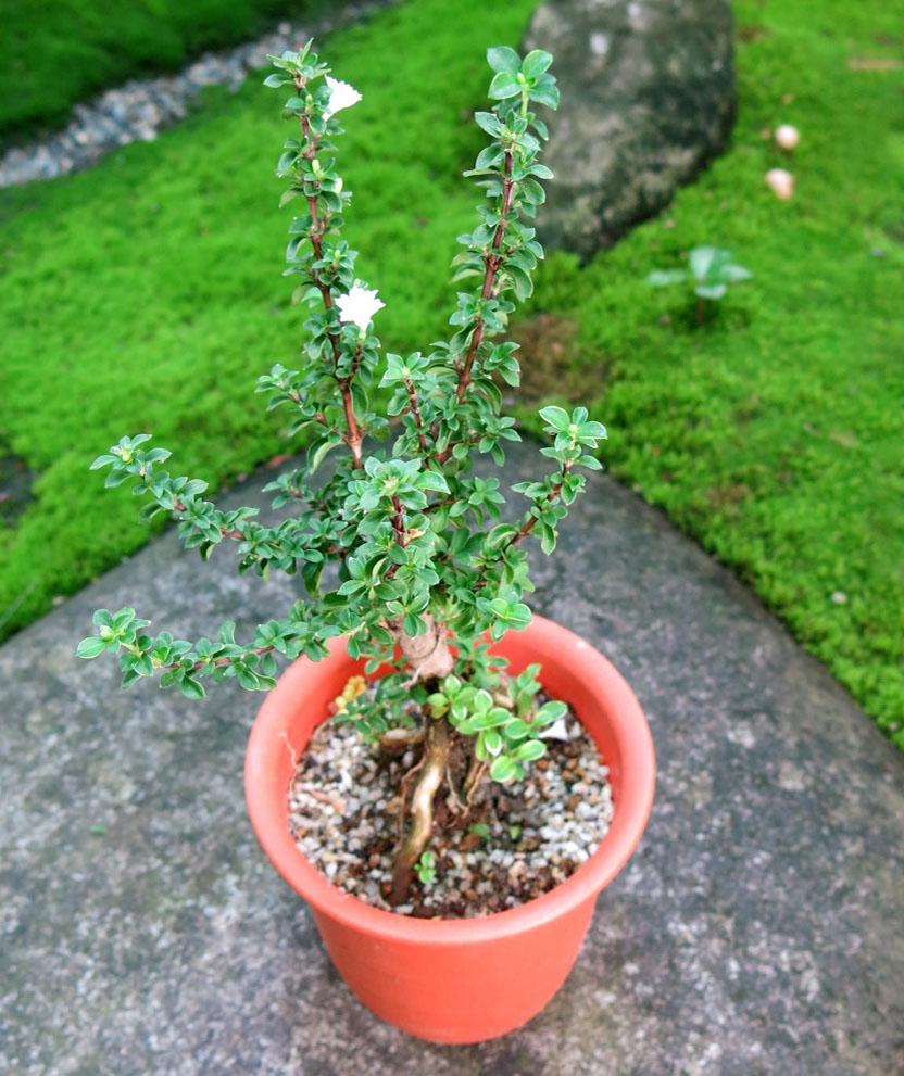 f:id:GardenPorter:20170803072210j:plain