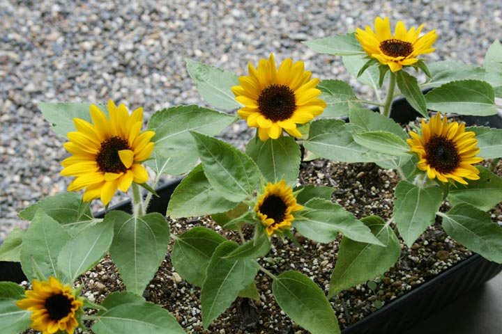 f:id:GardenPorter:20170810130837j:plain