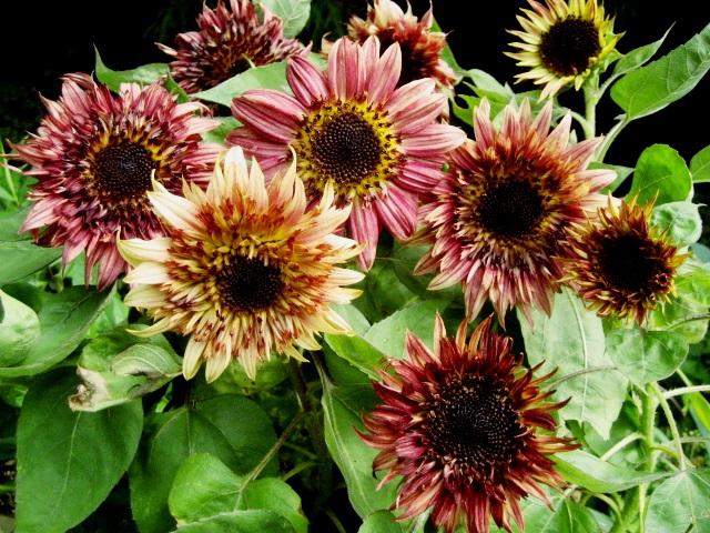 f:id:GardenPorter:20170810133350j:plain