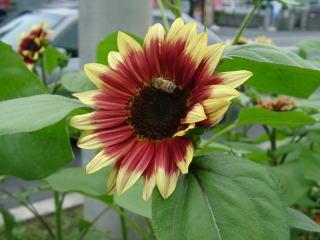 f:id:GardenPorter:20170810134245j:plain