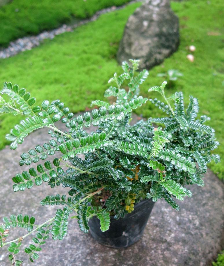 f:id:GardenPorter:20170817130936j:plain