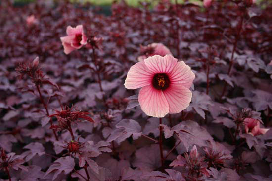 f:id:GardenPorter:20170921144852j:plain