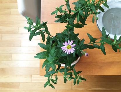 f:id:GardenPorter:20171005082822j:plain