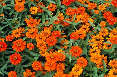f:id:GardenPorter:20171012145144j:plain