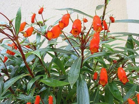 f:id:GardenPorter:20171012150355j:plain
