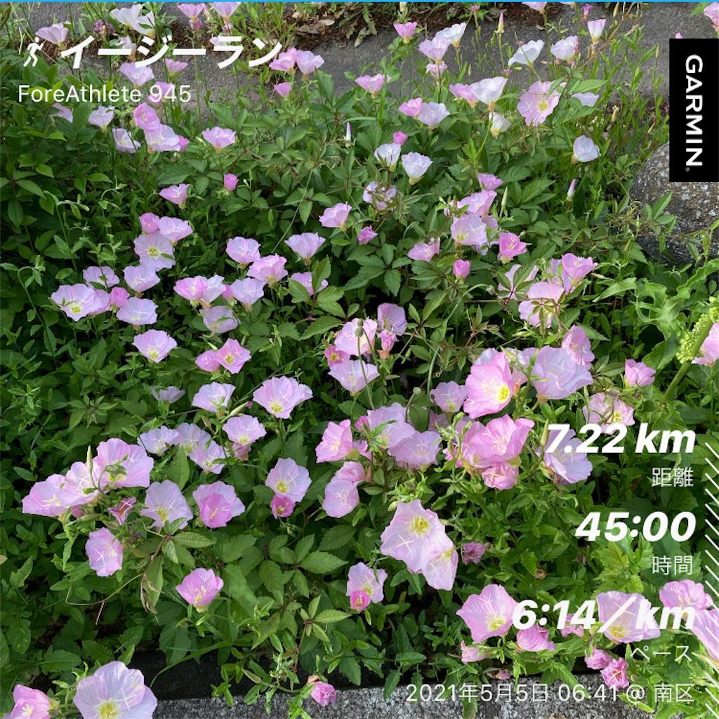 f:id:Genmai_17:20210505133904j:image
