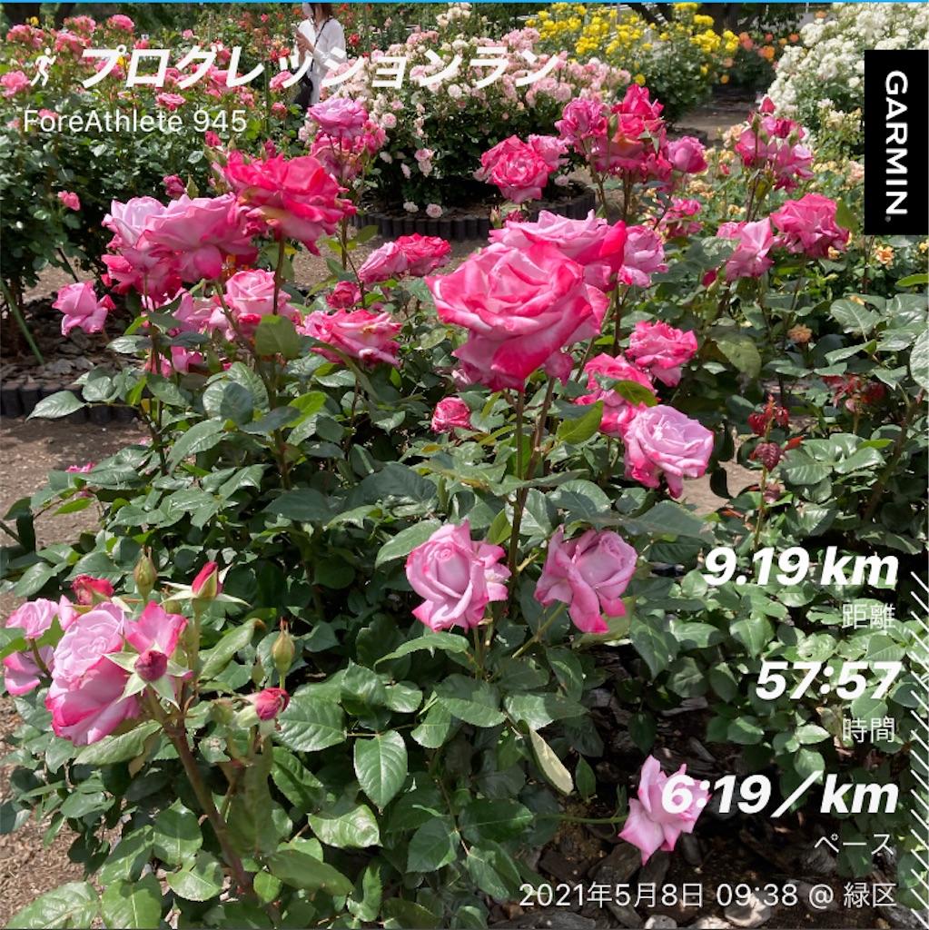 f:id:Genmai_17:20210508175015j:image
