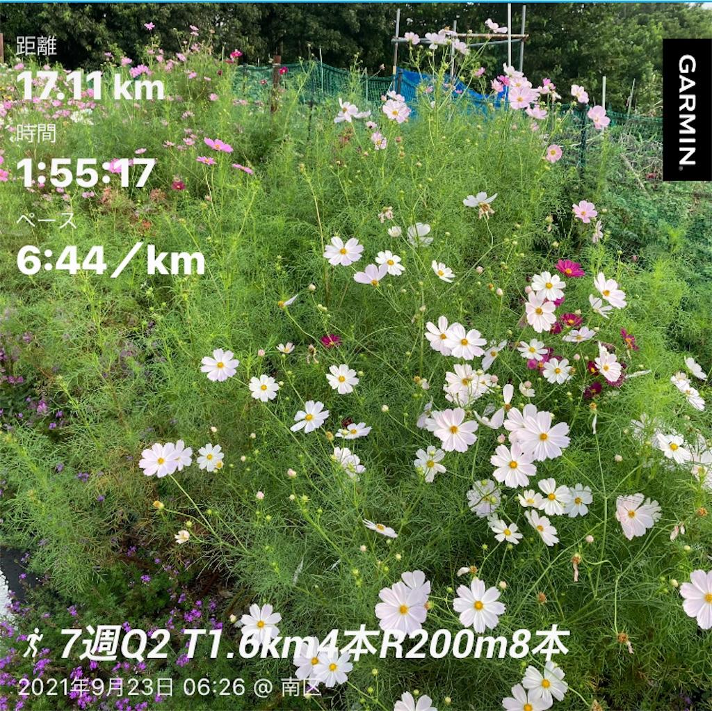 f:id:Genmai_17:20210923133629j:image