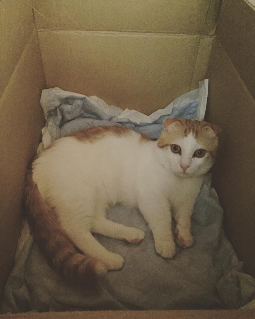 f:id:Gomez-cat:20170607001215j:plain