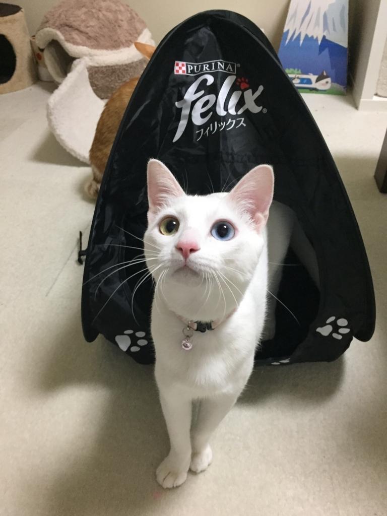 f:id:Gomez-cat:20170610224054j:plain