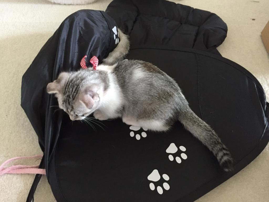 f:id:Gomez-cat:20170610225826j:plain